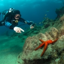 diver, starfish, reef, atlantic ocean