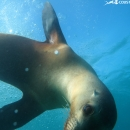 sea lion, galapagos islands, galapagos expedition