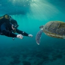 tenerife, green sea turtle, canary islands, lanzarote