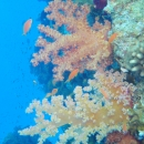 red sea, reef ras mohammed, abu nuhas