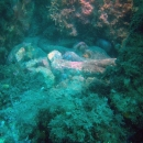 octopus, octopus_mating