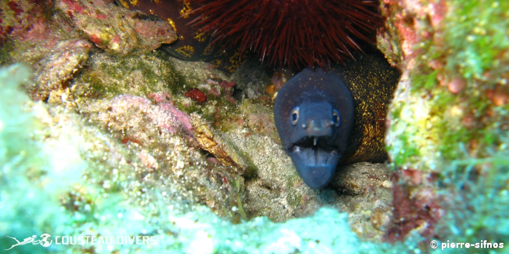greece, lobster, scuba diving, moray eel