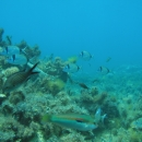 fish, octopus, reef, greece, marine sanctuary, kefalonia, agia efimia