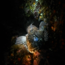 fish, british columbia, cold water, quadra island, copper bluffs, lingcod