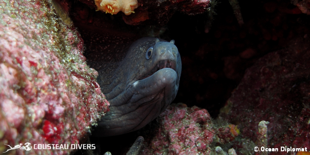 moray eel, galapagos islands, galapagos expedition