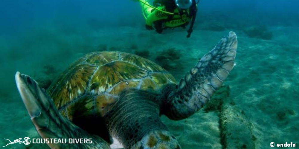 tenerife, buceo, canarias, turtle, diver