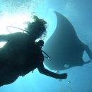manta ray, marine sanctuary, gulf of mexico, flower garden banks