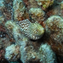 hawaii, eel, coral, oahu, tropical