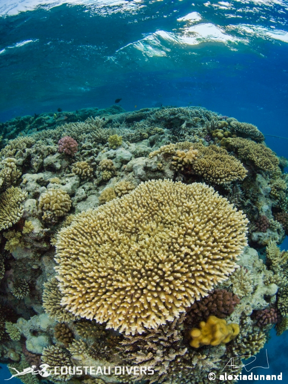 red sea, reef
