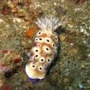 macro, nudibranch