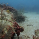 wreck, artificial reef